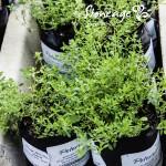 Stoneage-Herbs-300x300