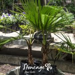 Stoneage-Palm-300x300