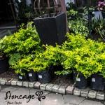 stoneage-Shrubs2-300x300