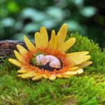 Daisy flower baby - 10339
