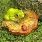 Frog ladybug woodchip -7585