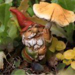 gnome-under-mushroom-8361