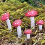 Mushrooms (5) - 17436