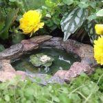 lily-pad-pond-walpp