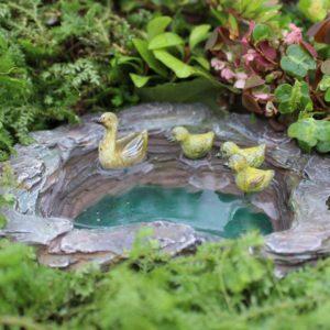 mallards-pond-wamp
